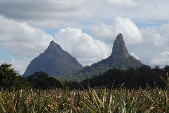 Glass House Mountains, Australien: Mt. Coonowrin in fore ground Mt Beerwah in the back with pineapples.