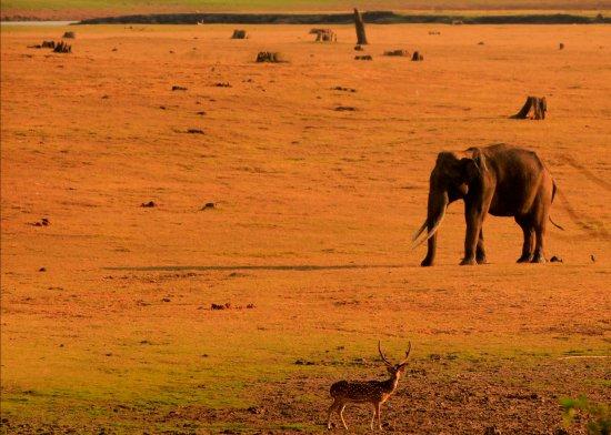 Kabini Wildlife Safari - Day Tour: Kabini Wildlife 4