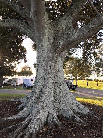 Belmont, Avustralya: photo4.jpg