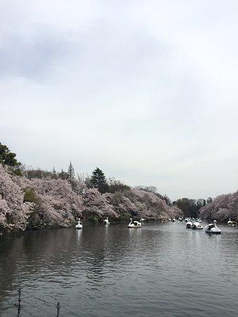 Inokashira Park : photo0.jpg
