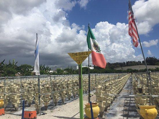 S Military Trl Delray Beach Florida