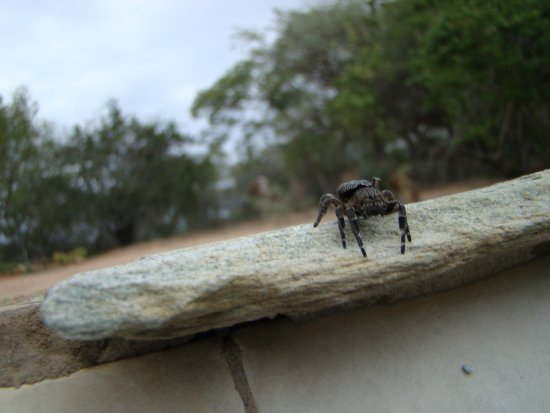 Eagle Encounters South Africa: hopping spider next to the pool