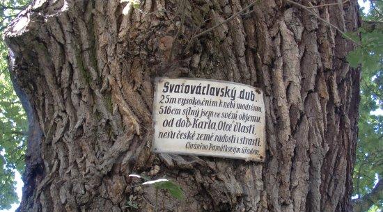 Central Bohemian Region, República Checa: SVATOVÁCLAVSKÝ DUB