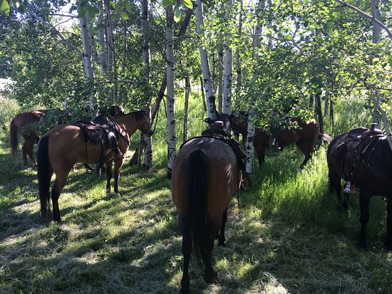 Martinsdale, MT: Horses resting at the breakfast ride