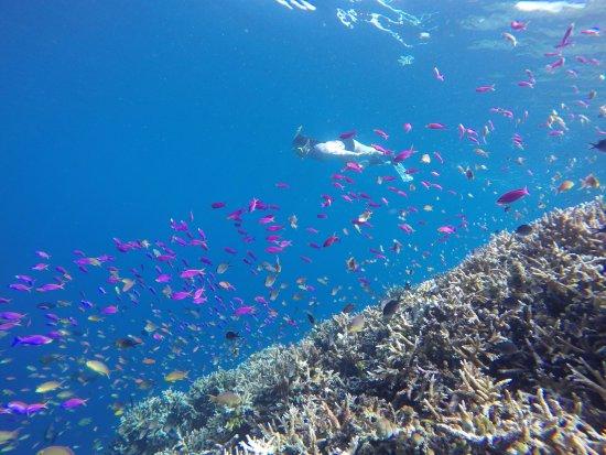 Derawan Islands, إندونيسيا: Snorkeling di Palung Kakaban
