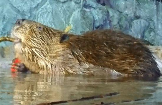 Coex Aquarium: _20170711_124252_large.jpg