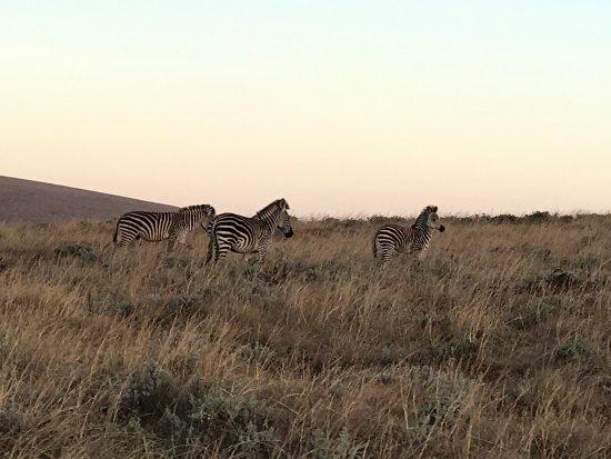 Foto de Nyika National Park