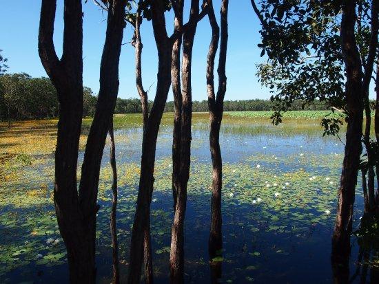 Mary River National Park: Mistake Billabong