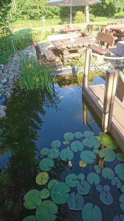 Mellenthin, Alemanha: Damm med fiskar och grodor.