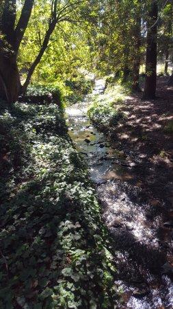 University of California, Berkeley: Beautiful park!