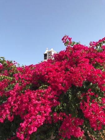 Quelfes, Portugal: photo1.jpg