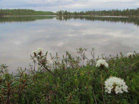 Luontonäkymä Porotila Toini Sanilan lähiympäristöstä