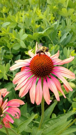 Museum of the Shenandoah Valley: A busy bee