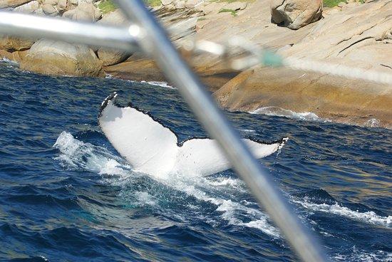 Albany Whale Tours صورة فوتوغرافية