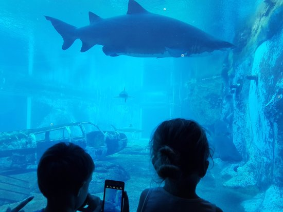 uShaka Marine World: The kids checking out the shark tank