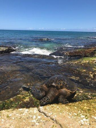 Oahu Photography Tours: photo0.jpg