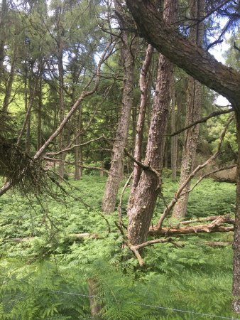 Exmoor National Park, UK: photo5.jpg