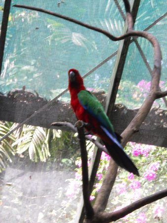 Kula Wild Adventure Park: A tropical bird