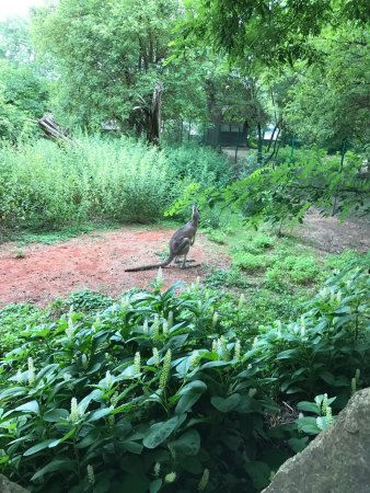 Zoo Plzeň: photo5.jpg
