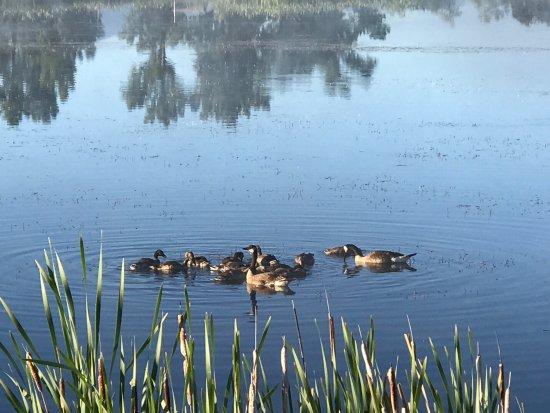 Stevensville, MT: photo1.jpg