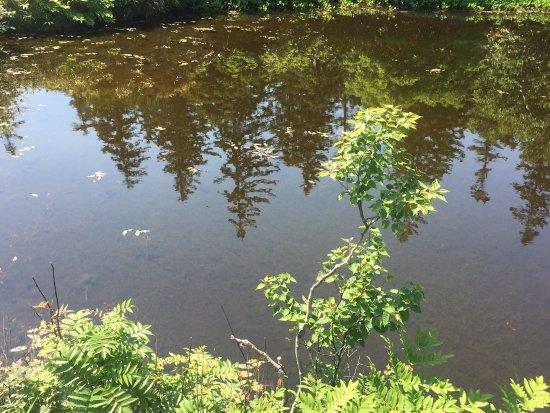 Kyowa-cho, Giappone: Greenery@ Shinsennuma