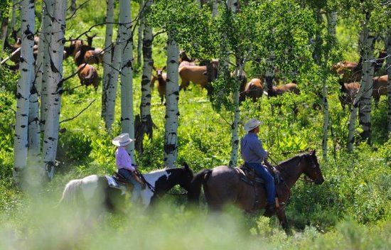 Clark, CO: Traffic on the ranch