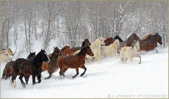 Clark, CO: Fun in the snow