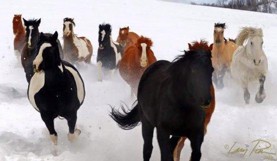 Clark, CO: Dashing through the snow