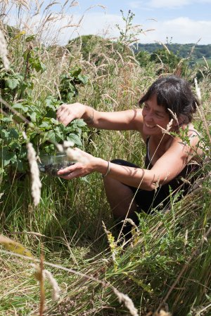 Wootton Fitzpaine, UK: Laurie picking plack currants