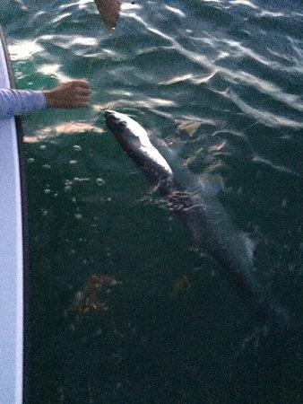 Tarpon Time Fishing Charters : Tarpon Time !