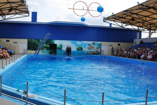 Azov Dolphinarium Nemo