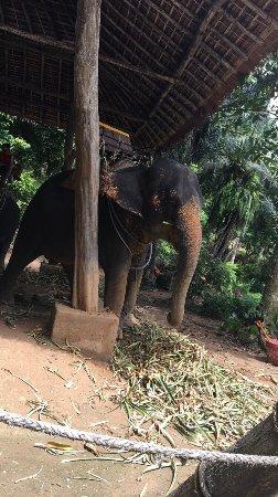 """Ко Чанг"" Сафари: Прогулки на слонах: photo1.jpg"