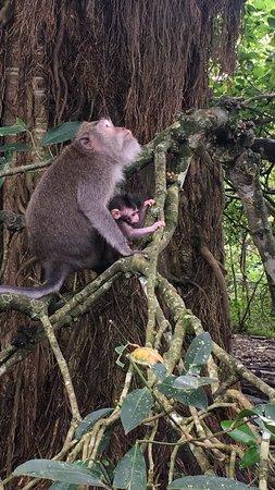 Komaneka at Monkey Forest Photo