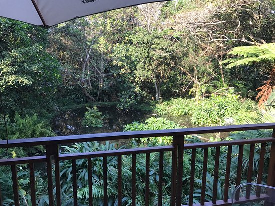 The Waterberry Tea Garden: photo1.jpg