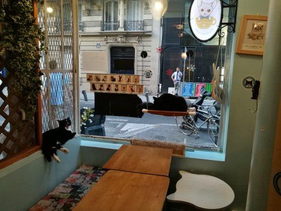 chat photo de chat mallows cafe paris tripadvisor. Black Bedroom Furniture Sets. Home Design Ideas