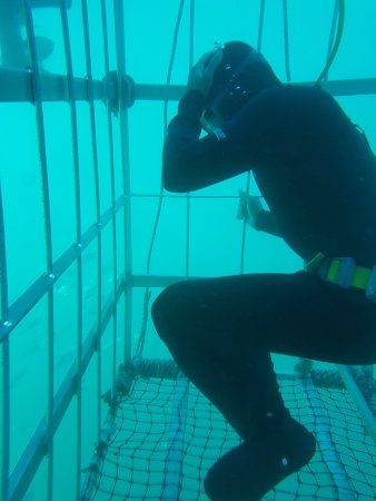 African Shark Eco-Charters: cage