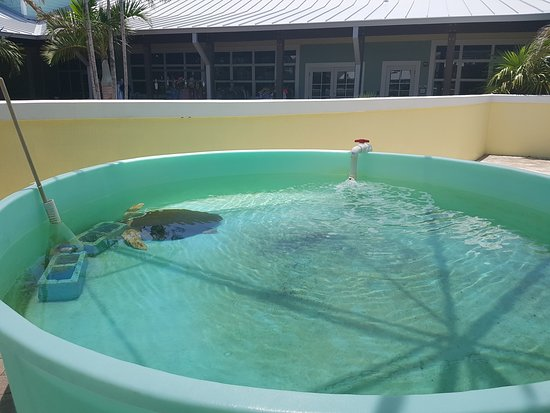 Loggerhead Marinelife Center Photo