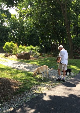 Wayne, PA: Walking your dogs, on a leash