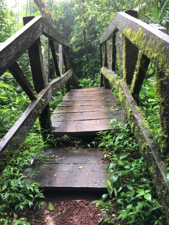 Tierra Day Tours:  Granada: Cloud forest hike, Mombacho