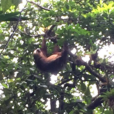 "Tierra Day Tours:  Granada: Sloth ""hanging 9"" on cloud forest hike, Mombacho"