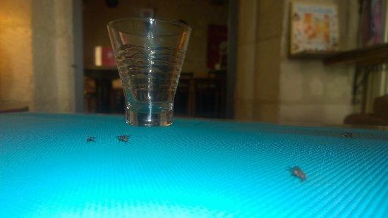 Crissay-sur-Manse, Frankrig: .....estas algunas de las moscas que nos acompañaron.