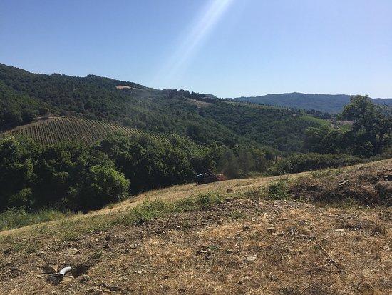 Радда-ин-Кьянти, Италия: Vini Castelvecchi in Chianti