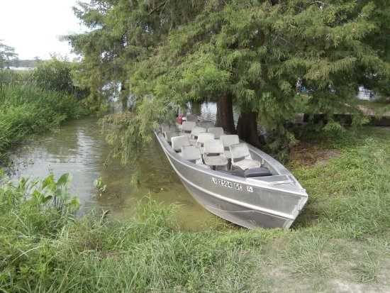 Cajun Country Swamp Tours : Tour Boat (don't let that scare you!) Gets you in real close.