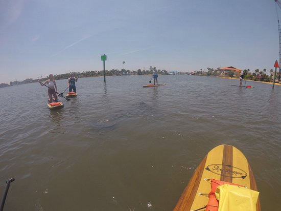 Manatees Always Showing Us Love In Daytona Beach Picture Of Three Up To 57 Off Standup Paddleboarding