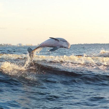 Dolphin Cruise aboard the Cold Mil Fleet: IMG_20170710_193253_large.jpg