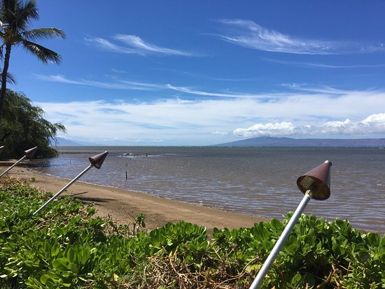 Kaunakakai, HI: Breadfruit tree and low tide at the hotel