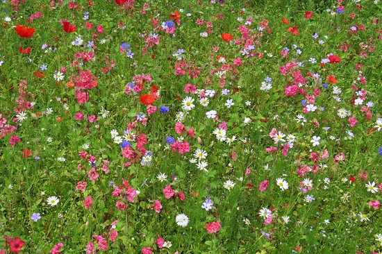 King's Lynn, UK: wild flowers by the cafe