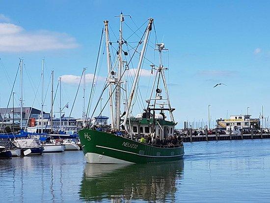 Krabbenfischen mit der MK Moewe