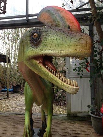 Viry, France: Dinosaure échappé de son enclos à Tropicaland !