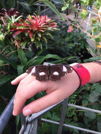 Butterfly Creek: photo3.jpg